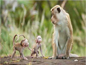 Mơ thấy con khỉ báo hiệu điềm gì, nên đánh số mấy?