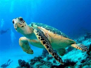 Mơ thấy rùa là điềm tốt hay xấu, đánh con gì thì trúng đề?