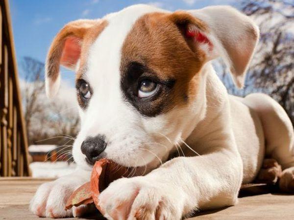 Mơ thấy chó đánh con gì đổi đời, điềm báo hên hay xui?