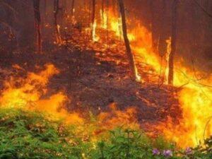 Mơ thấy cháy rừng đánh liền tay cặp số may mắn nào?
