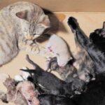 Mơ thấy mèo đẻ đánh con gì – Chiêm bao thấy mèo đẻ là điềm tốt hay xấu