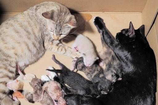 Nằm mơ thấy mèo đẻ con có ý nghĩa gì
